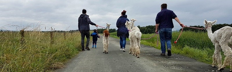 Photo of The Alpaca Trekking Experience.