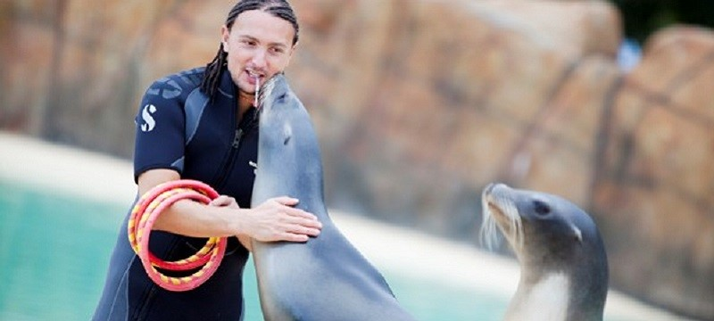 Photo of a keeper and a sea lion at Blackpool Zoo.