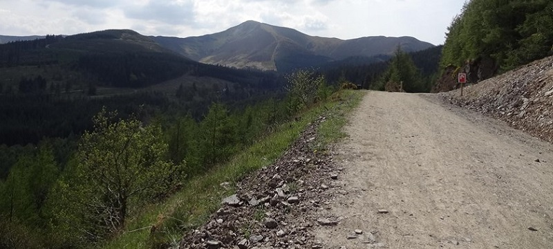Photo of a trail at Whinlatter Forest Park.