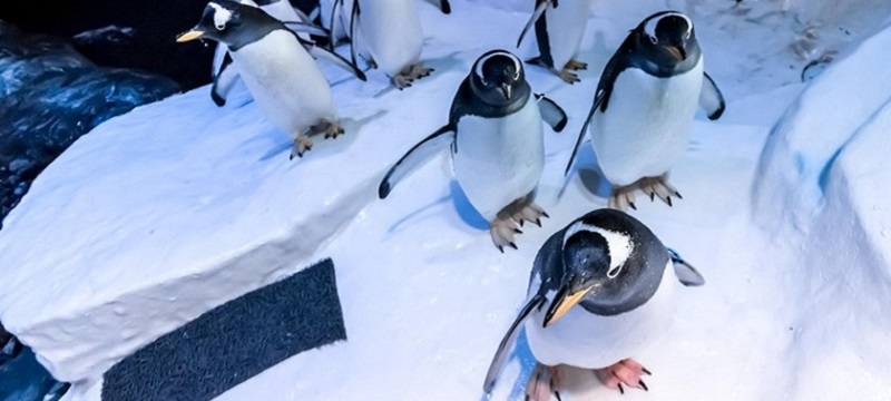 Photo of penguins at The Deep.