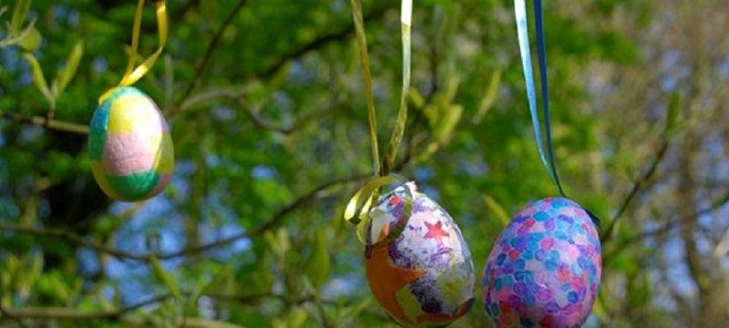 Photo of eggs hanging off a tree.