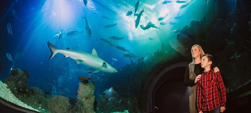Photo of sharks in a large aquarium.