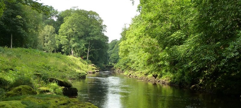 Photo of Strid Wood.