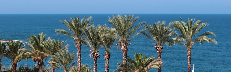 Photo of palm trees in Cyprus.