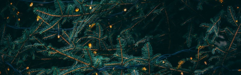 Close-up photo of a Christmas tree, showing pine needles and fairy lights.