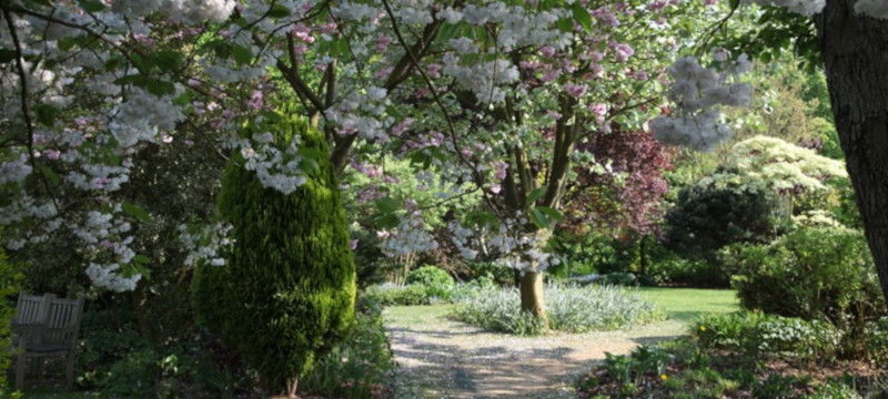 Photo of cherry blossom at Barnsdale Gardens.