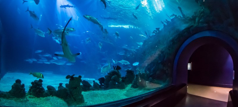 Photo of sharks and fish swimming at The Deep in Hull.