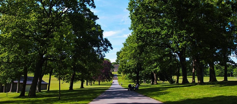 Photo of a paved path through Roundhay Park.