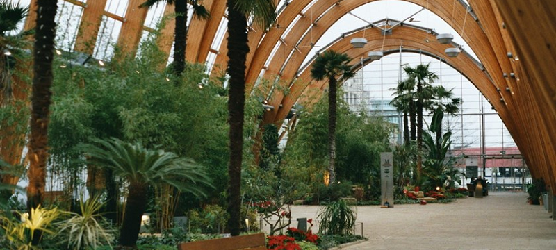 Photo of the interior of the glasshouse at Sheffield Winter Garden, showing tropical plants.