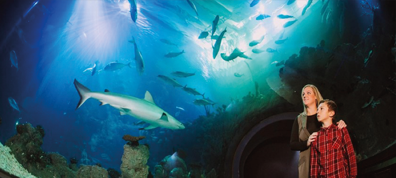 Image of people visiting The Deep with sharks and fish swimming overhead