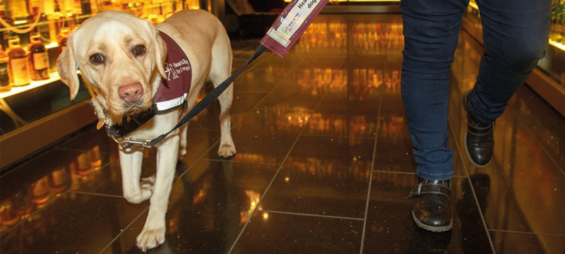 Image of an assistance dog at The Scotch Whisky Experience