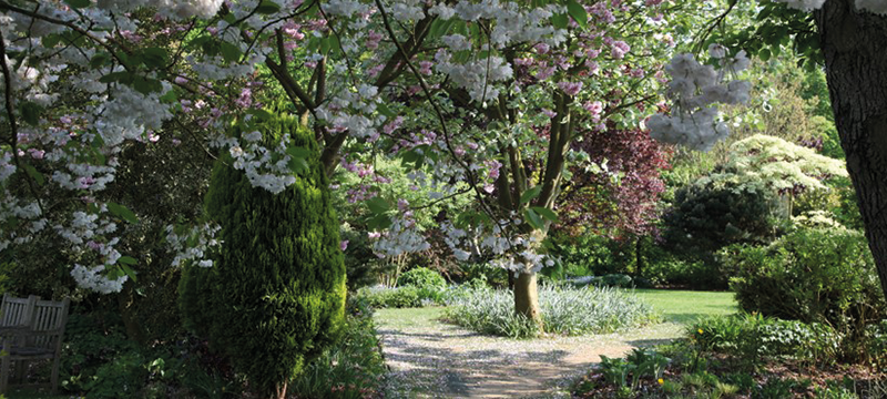 Image of a garden walk where sun shines through the trees.