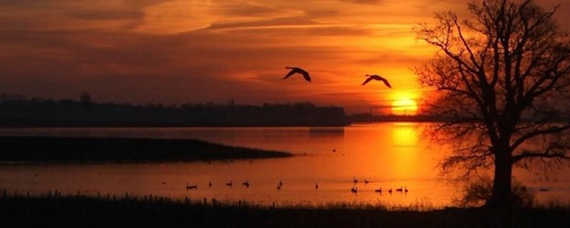 Photo of a sunset and geese flying over water.
