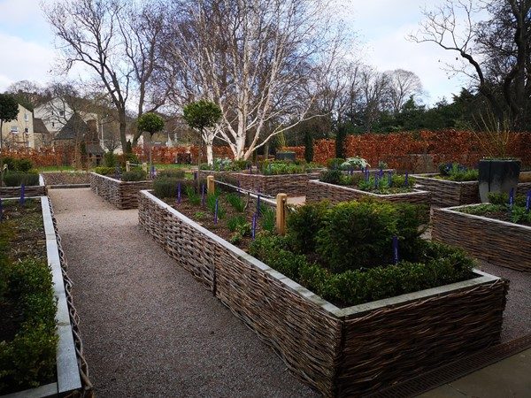 Raised beds in the physic garden