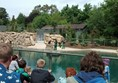 Picture of Dublin Zoo - Sea lion feeding and talk