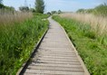 A walkway through the reed beds