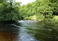 Picture of Strid Wood and the Strid