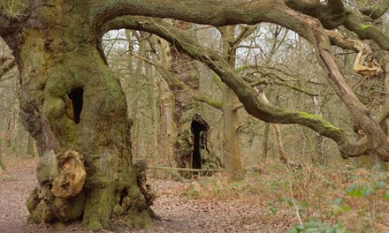 Sherwood Forest