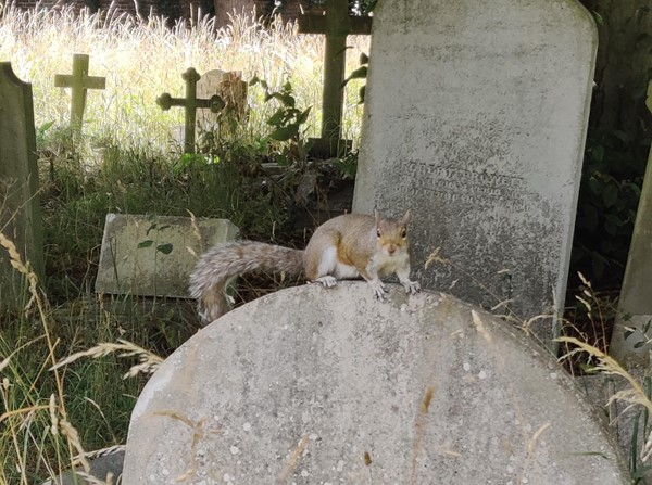 A squirrel on top of an old gravestone