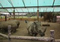 Inside the rhino house with three rhinos
