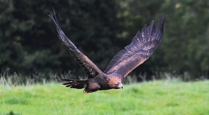 Loch Lomond Bird of Prey Centre