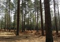 Picture of Moors Valley Country Park - Lots of trees, lots of mud! Kids love it, but your wheelchair won't!