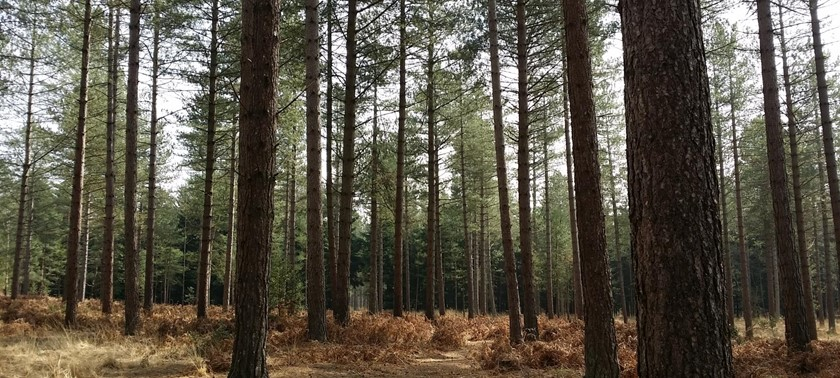 Moors Valley Country Park and Forest