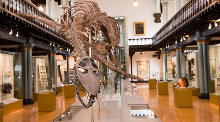 The Hunterian Museum and Art Gallery