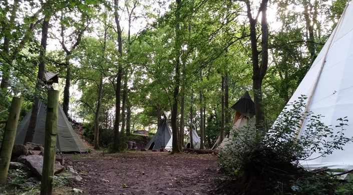 Hollybush Inn and Campsite